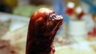 Alien: O Oitavo Passageiro, de Ridley Scott, é um marco do cinema de terror e da ficção científica, e trata de temas instigantes como o amadurecimento da psique feminina, conflito entre espécies e ecossistemas, a falta de escrúpulos das grandes empresas capitalistas e uma alegoria do estupro